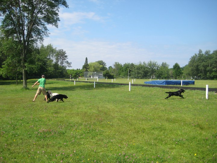Frankfort Dog Park